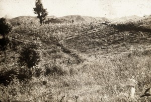 People had stopped cultivation since there was no top-soil left in this land.