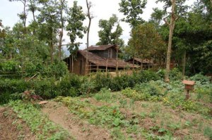 Sarang Farm : Vegetables, Honey and medicinal fence
